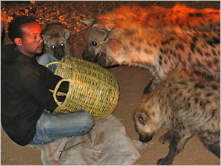 harar-hyena2.jpg